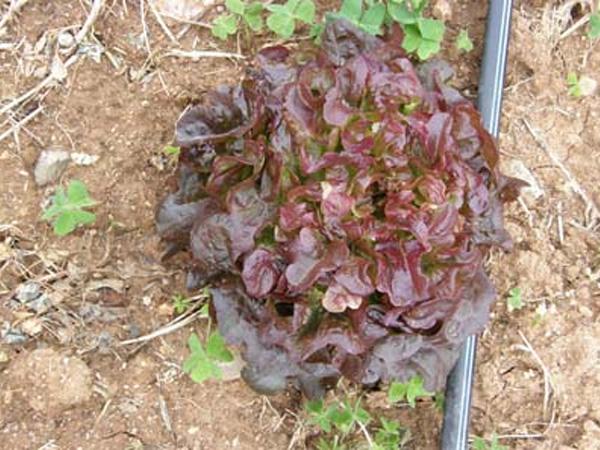 236-plantada-temporada-hort